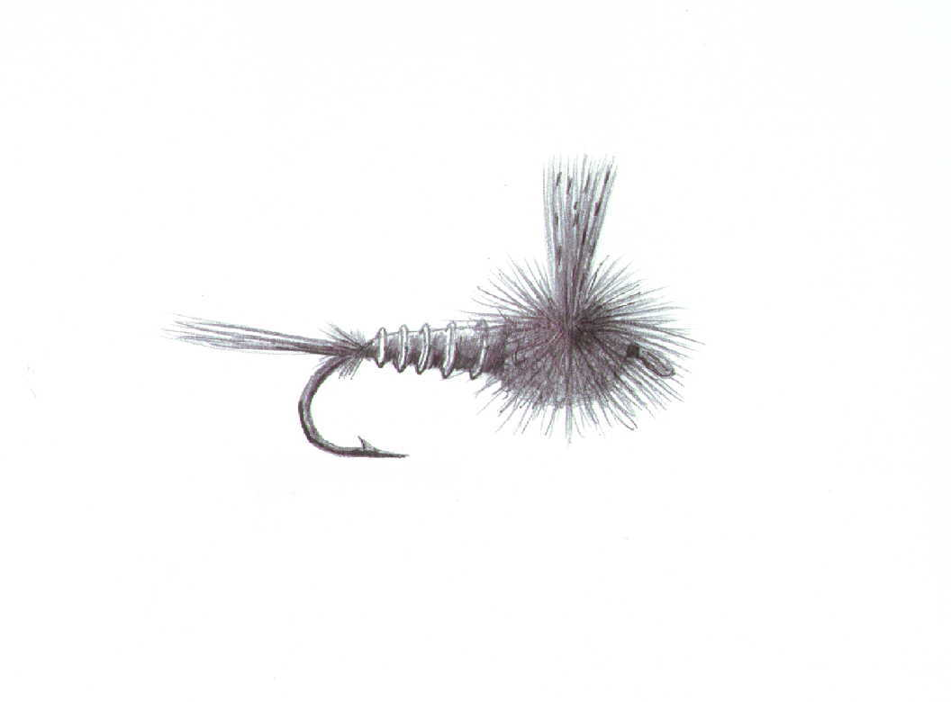 fly fishing drawing - photo #27